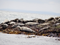 Sassy seals