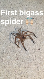 Huntsman Spider ew