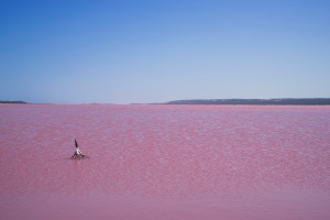 Only in Australia would they have a pink lake